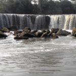 Tempat Wisata di Bekasi Terbaru, Populer dan Hits Dikunjungi